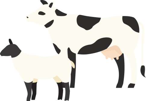 Image of cow and lamb