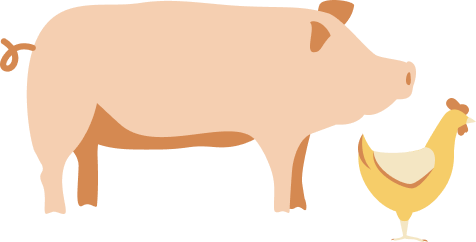 Image of pig and chicken